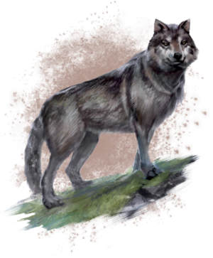 ON-concept-wolf.png