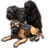 ON-icon-pet-Alliance War Dog.png