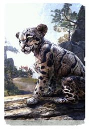 ON-card-Clouded Senche-Leopard Cub.png