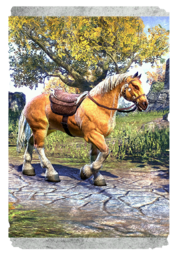 ON-card-Palomino Horse.png