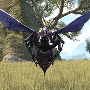 online giant wasp the unofficial elder scrolls pages uesp