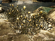 Skyrimyellow mountain flower the unofficial elder scrolls pages skyrimyellow mountain flower mightylinksfo Images