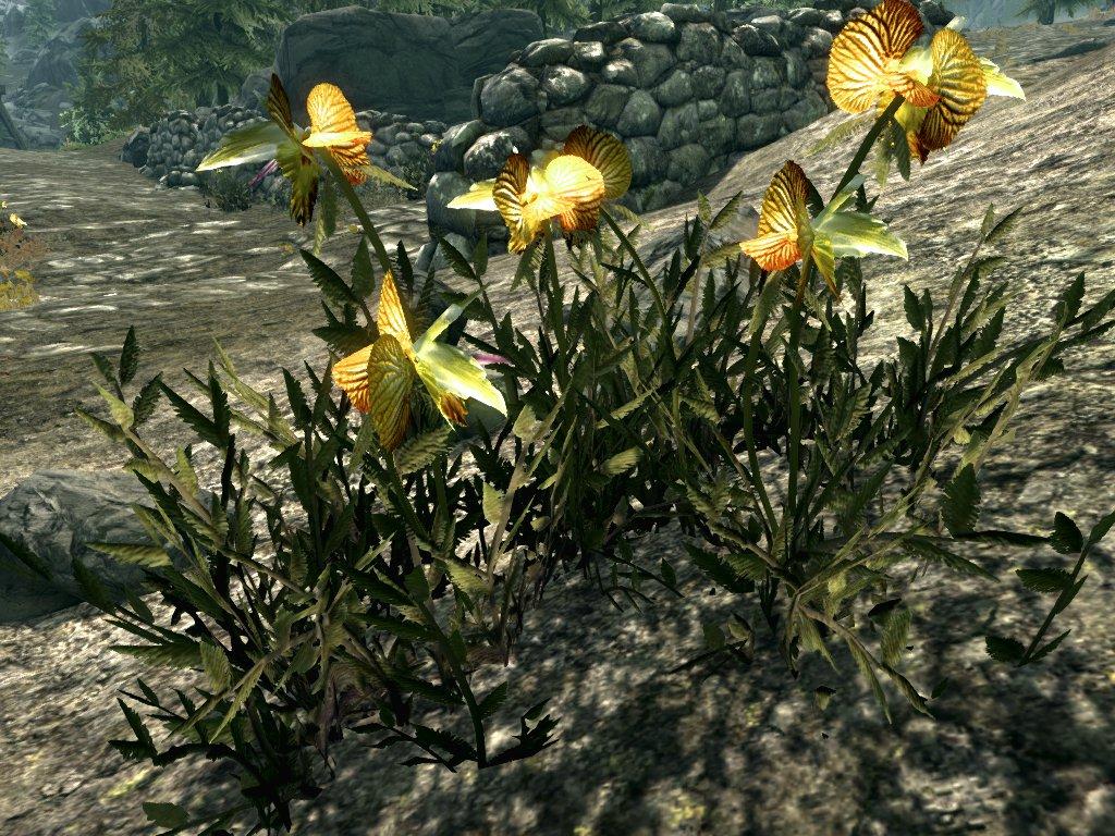 SR-flora-Dragon's_Tongue.jpg