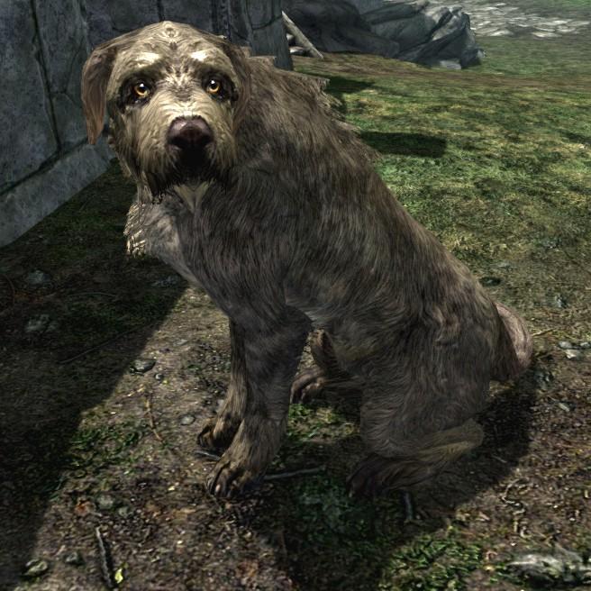 Adopting Stray Dog Skyrim