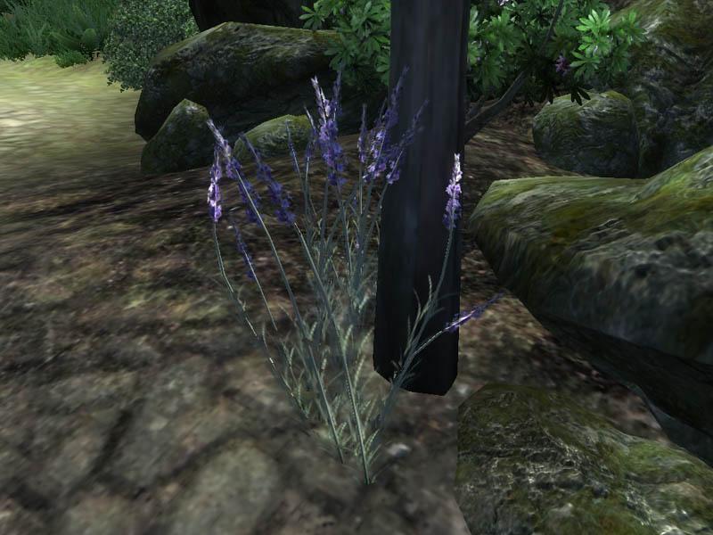 http://images.uesp.net/f/fc/OB-flora-Lavender.jpg