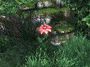 Цветок редворта в обливион