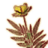 OB-icon-ingredient-Dragon Tongue.png