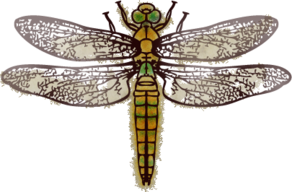 292px-SR-book-Dragonfly.png
