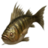 ON-icon-fish-Perch.png