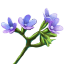 File:ON-icon-reagent-Bugloss.png