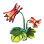 ON-icon-reagent-Columbine.png