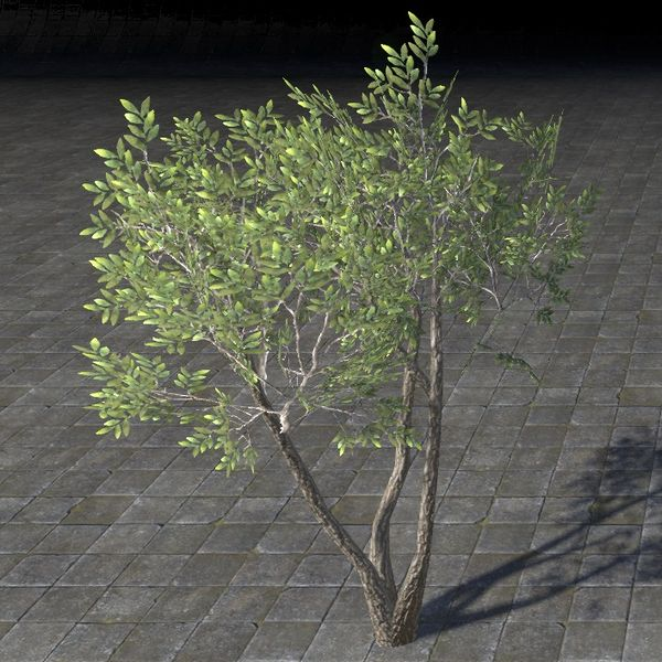File:ON-item-furnishing-Sapling, Growing Shade.jpg