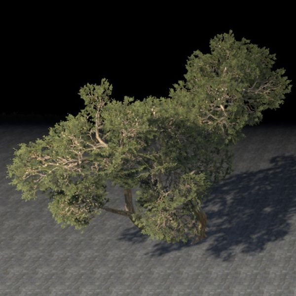 File:ON-item-furnishing-Trees, Sprawling Juniper Cluster.jpg