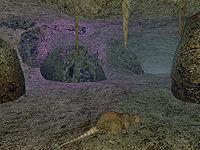 Ebony mine