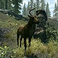 In Skyrim