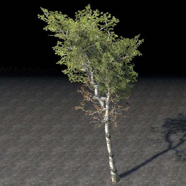 File:ON-item-furnishing-Tree, Young Healthy Birch.jpg