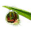ON-icon-style material-Bloodscent Dew.png