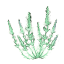 ON-icon-reagent-Wormwood.png