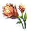 File:ON-icon-reagent-Mountain Flower.png