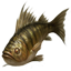 File:ON-icon-fish-Perch.png