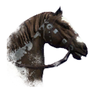 ON-icon-horse-Skewbald.png