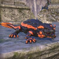 ON-pet-Flame Skin Salamander.jpg
