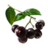 ON-icon-food-Acai Berry.png