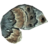 SR-icon-ingredient-Ancestor Moth Wing.png