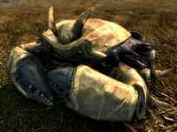 Skyrim:Dwarven Armored Mudcrab (creature) - The Unofficial