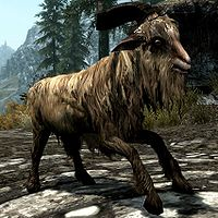 Skyrim:Goat - The Unofficial Elder Scrolls Pages (UESP)