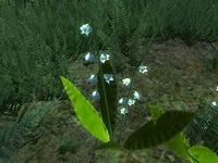 OB-flora-Lily of the Valley.jpg