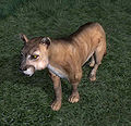 OB-creature-Mountain Lion.jpg