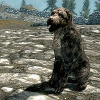 Skyrim:Stray Dog - The Unofficial Elder Scrolls Pages (UESP)
