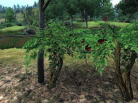 OB-flora-Grape Vine.jpg