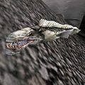 A Slaughterfish in Morrowind