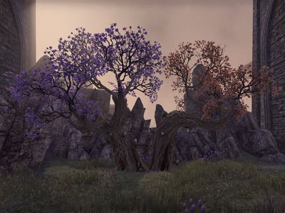 ON-flora-Morrowind Cherry Blossom Trees.jpg