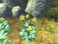 OB-flora-Lady's Mantle.jpg