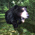 OB-creature-Black Bear.jpg