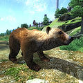 OB-creature-Brown Bear.jpg