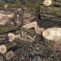 SRMOD-icon-Faster Wood Chopping.png