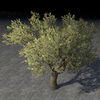 ON-item-furnishing-Tree, Kvatch Nut.jpg