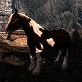 Skyrim:Horses - The Unofficial Elder Scrolls Pages (UESP)