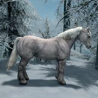 Skyrim:Wild Horse - The Unofficial Elder Scrolls Pages (UESP)
