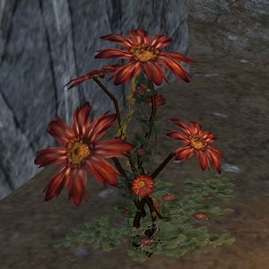 ON-node-Crimson Moonflower.jpg