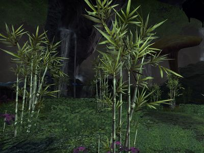 ON-flora-Moon Sugar Cane.jpg