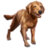 ON-icon-pet-Bravil Retriever.png
