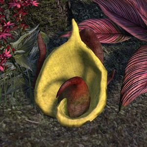 ON-flora-Scuttle Bloom Hidden.jpg